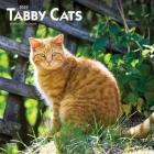Tabby Cats 2020 Square Cover Image