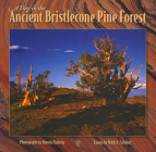 A Day in the Ancient Bristlecone Pine Forest (Companion Press) Cover Image