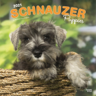 Schnauzer Puppies 2021 Square Cover Image