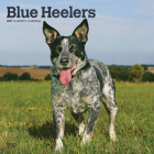 Blue Heelers 2021 Square Cover Image