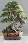 Bonsai: Logbook Cover Image