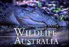 Wildlife Australia Cover Image
