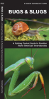 Bugs & Slugs, 2nd Edition: A Folding Pocket Guide to Familiar North American Invertebrates (Pocket Naturalist Guide) Cover Image