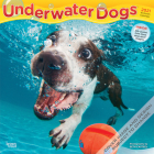 Underwater Dogs 2021 Square Cover Image