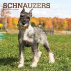 Schnauzers 2021 Square Foil Cover Image