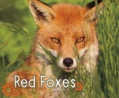 Red Foxes Cover Image