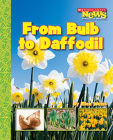 From Bulb to Daffodil (Scholastic News Nonfiction Readers: How Things Grow) Cover Image