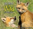 Born Wild in Montana Cover Image
