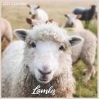 Lambs 2021 Calendar: Official Sheeps 2021 Wall Calendar 18 months Cover Image