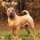 Shar Pei 2021 Square Cover Image