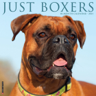 Just Boxers 2021 Wall Calendar (Dog Breed Calendar) Cover Image