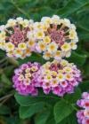 Blossom Bouquet Sketchbook (Natural Wonders #58) Cover Image