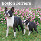 Boston Terriers 2021 Square Cover Image