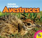 Avestruces = Ostriches (Animales en la Granja) Cover Image