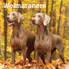 Weimaraners 2021 Square Cover Image