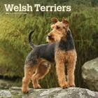 Welsh Terriers 2020 Square Btuk Cover Image