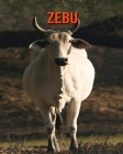 Zebu: Children's Books --- Fascinating Zebu Facts for Kids with Stunning Pictures! Cover Image