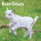 Baby Goats 2021 Square Cover Image
