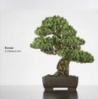 Bonsai: A Patient Art Cover Image
