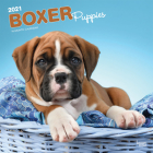 Boxer Puppies 2021 Square Cover Image