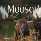 Our Love of Moose Cover Image