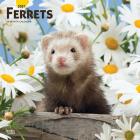 Ferrets 2021 Square Cover Image