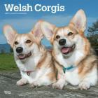 Welsh Corgis 2019 Square Cover Image