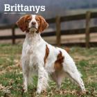 Brittanys 2021 Square Cover Image