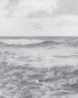 Barbara Bosworth: The Sea Cover Image