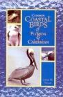 Common Coastal Birds of Florida & the Caribbean Cover Image