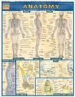 Anatomy (Quickstudy: Academic) Cover Image