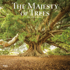 Majesty of Trees, the 2022 Square Cover Image