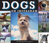 2021 Dogs on Instagram Boxed Daily Calendar Cover Image