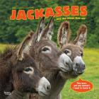 Jackasses 2020 Square Cover Image