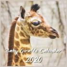 Baby Giraffe Calendar 2020: 12 Month Calendar Cover Image