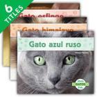 Gatos (Cats Set 2) (Set) Cover Image