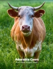 Adorable Cows Full-Color Picture Book: Cows Picture Book for Children, Seniors and Alzheimer's Patients- Aging Parents- Mammal Calf Cover Image