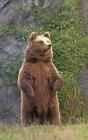 Notebook: brown bear animal world natural history bears Cover Image