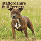 Staffordshire Bull Terriers 2021 Square Btuk Cover Image