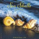 2016 Sea Shells Wall Calendar Cover Image