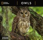 Cal 2020-National Geographic Owls Wall Cover Image