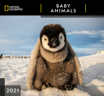 Cal 2021- National Geographic Baby Animals Wall Cover Image