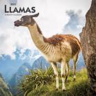 Llamas 2021 Square Cover Image