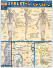 Skeletal System (Quickstudy: Academic) Cover Image