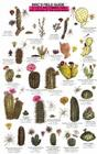 Cacti, Shrubs, Trees (Mac's Guides) Cover Image