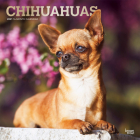 Chihuahuas 2021 Square Foil Cover Image