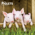 Piglets 2021 Square Cover Image