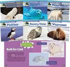 Arctic Animals (Set) Cover Image