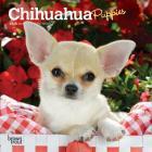 Chihuahua Puppies 2020 Mini 7x7 Cover Image