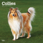 Collies 2021 Square Cover Image
